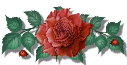 a_rose_bar.jpg
